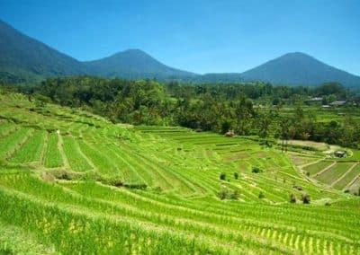 Jatiluwih Rice Terrace 1201192