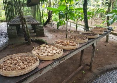 Luwak Coffee Plantation 1301191