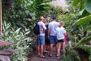 Luwak Coffee Plantation - Honeybee Farm 1301191