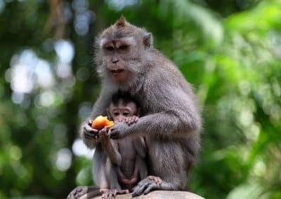 Monkey Forest 1301194