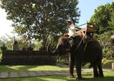 Bali Elephant Camp Tour - Galerry 0907201914