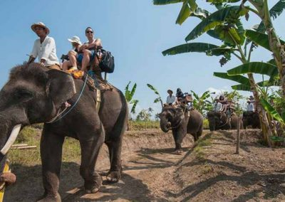 Bali Elephant Camp Tour - Galerry 0907201915