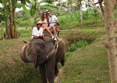 Bali Elephant Camp Tour - Galerry 0907201916