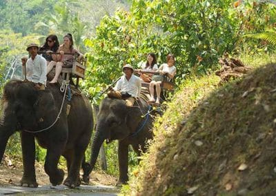 Bali Elephant Camp Tour - Gallery 090720191