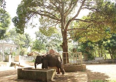 Bali Elephant Camp Tour - Gallery 0907201912