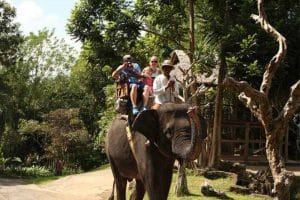 Bali Elephant Camp Tour - Gallery 0907201913