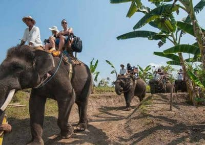 Bali Elephant Camp Tour - Gallery 0907201915