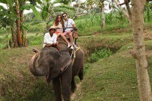 Bali Elephant Camp Tour - Gallery 0907201916