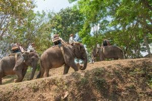 Bali Elephant Camp Tour - Gallery 0907201917