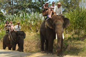 Bali Elephant Camp Tour - Gallery 0907201918