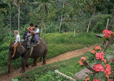 Bali Elephant Camp Tour - Gallery 090720192
