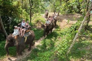 Bali Elephant Camp Tour - Gallery 0907201920