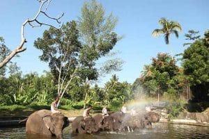 Bali Elephant Camp Tour - Gallery 090720197