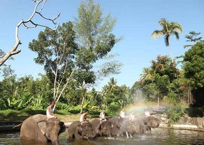 Bali Elephant Camp Tour - Gallery 090720197