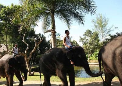 Bali Elephant Camp Tour - Gallery 090720198