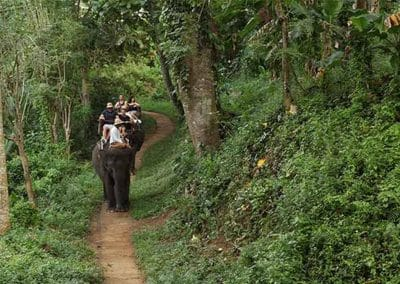 Bali Elephant Camp Tour - Gallery 090720199