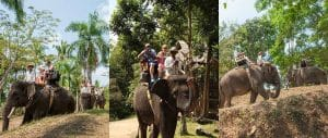 Bali Elephant Camp Tour