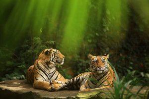 Bali Zoo - Animal King & Queen