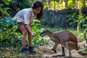 Bali Zoo Deer Park