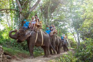 Bali Zoo Elephant Safari Ride Tour - Galerry 120720193
