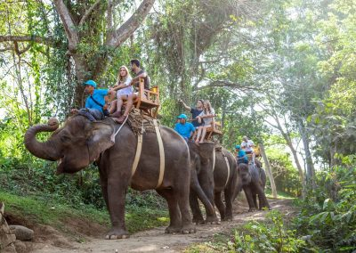 Bali Zoo Elephant Safari Ride Tour - Galerry 120720193