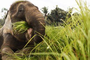 Bali Zoo Elephant Safari Ride Tour - Galerry 120720196