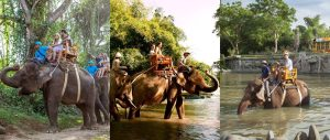 Bali Zoo Elephant Safari Ride Tour