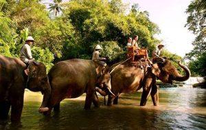 Bali Zoo Elephant Safari Ride Tour