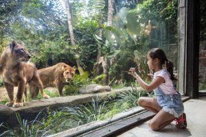 Bali Zoo Wana Restaurant 01