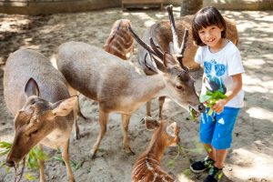 Peting Bali Zoo