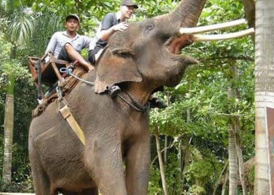 Bali Bakas Elephant Ride Tour - Gallery 12081910