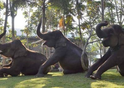 Bali Bakas Elephant Ride Tour - Gallery 12081911