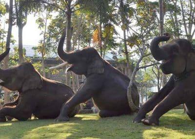 Bali Bakas Elephant Ride Tour - Gallery 12081911
