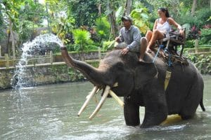 Bali Bakas Elephant Ride Tour - Gallery 12081912