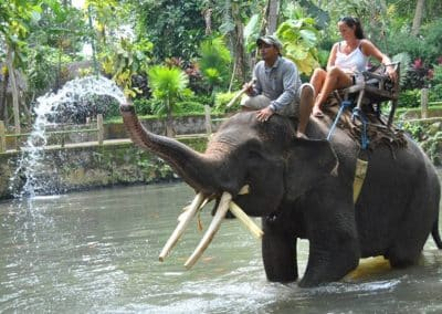 Bali Bakas Elephant Ride Tour - Gallery 12081912