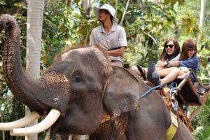 Bali Bakas Elephant Ride Tour - Gallery 12081913