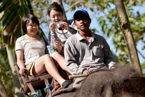 Bali Bakas Elephant Ride Tour - Gallery 12081914