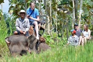 Bali Bakas Elephant Ride Tour - Gallery 12081915