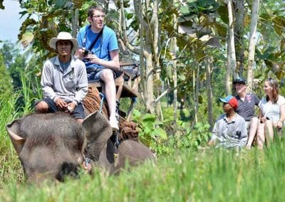 Bali Bakas Elephant Ride Tour - Gallery 12081915