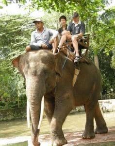 Bali Bakas Elephant Ride Tour - Gallery 12081916