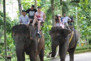 Bali Bakas Elephant Ride Tour - Gallery 1208193