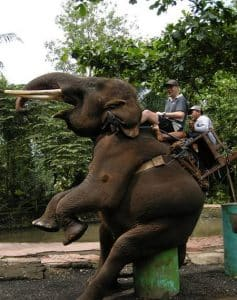 Bali Bakas Elephant Ride Tour - Gallery 1208194