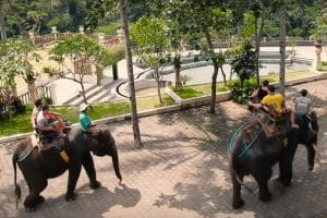 Bali Bakas Elephant Ride Tour - Gallery 1208195