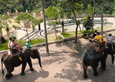 Bali Bakas Elephant Ride Tour - Gallery 1208195