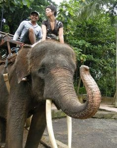 Bali Bakas Elephant Ride Tour - Gallery 1208197