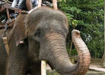 Bali Bakas Elephant Ride Tour - Gallery 1208197