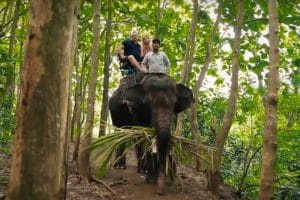 Bali Bakas Elephant Ride Tour - Gallery 1208198