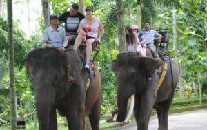 Bali Bakas Elephant Ride Tour
