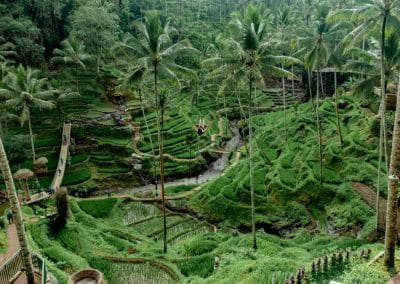 Bali Ubud Swing Tour - Gallery 100920191