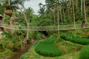 Bali Ubud Swing Tour - Gallery 1009201918